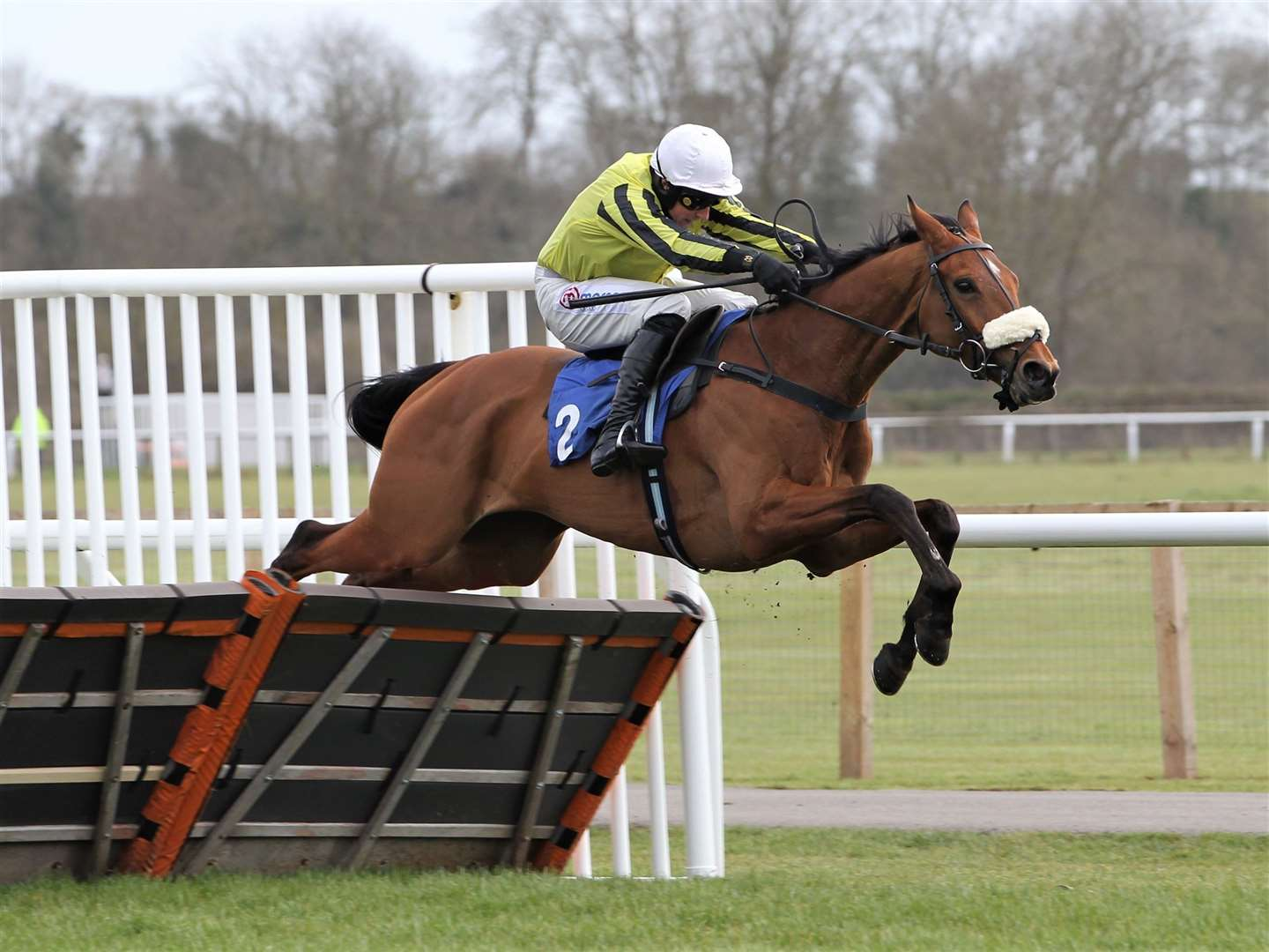 Stepney Causeway and Harry Skelton win at Stratford. Photo: Steve Davies / www.sdphotos.co.uk