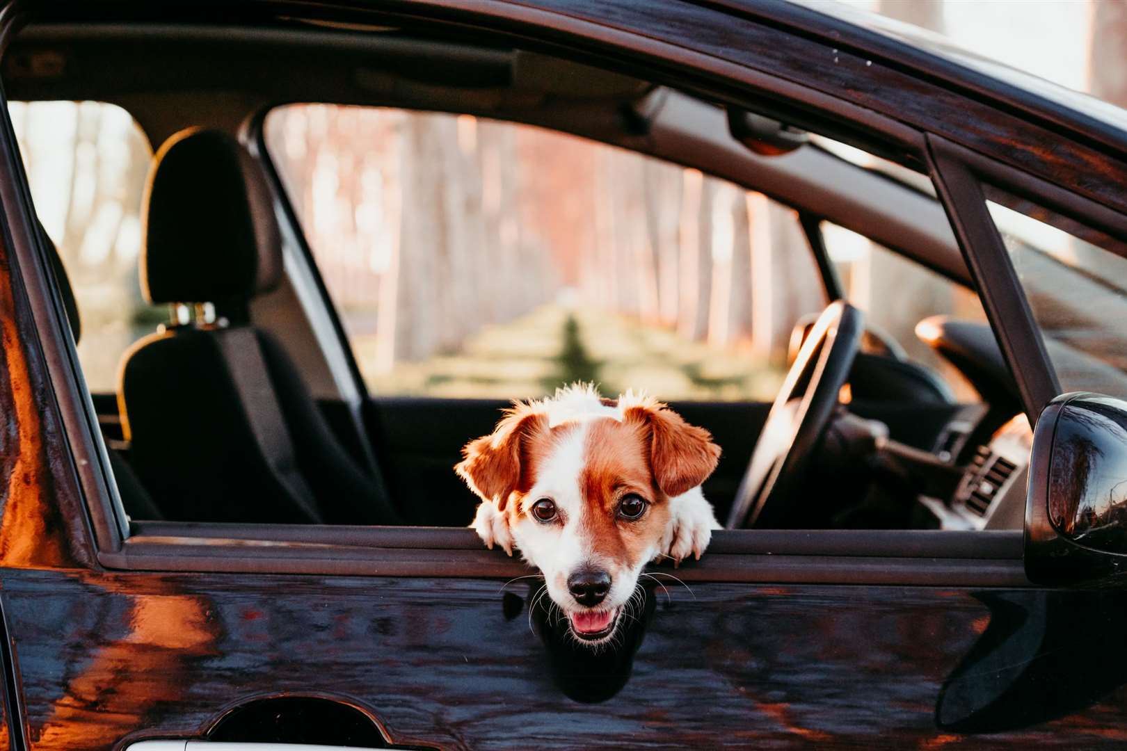 Motorists distracted by their pet being loose in the car risk breaching the Highway Code, invalidating insurance or being in trouble with the police